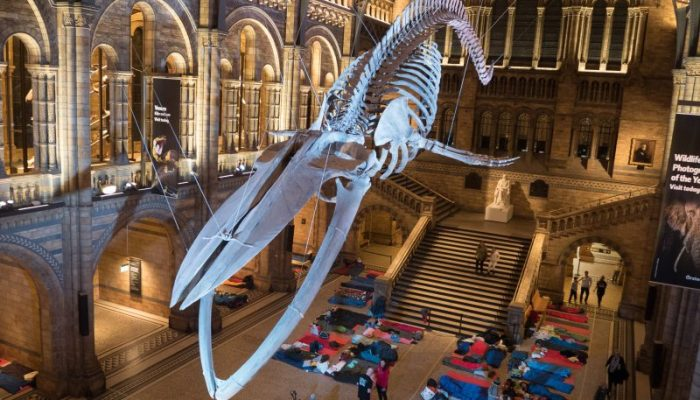 BG Goes to… Dino Snores at the Natural History Museum with Air BnB