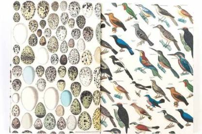 page in fauna poster gift wrap book 2