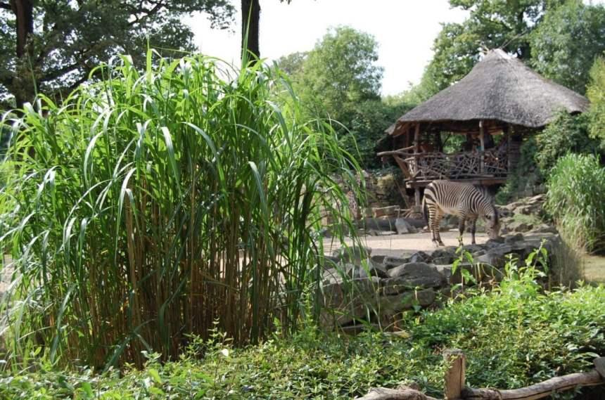 Sambesi - Zoo Hannover