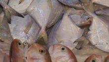 Frisch Fische