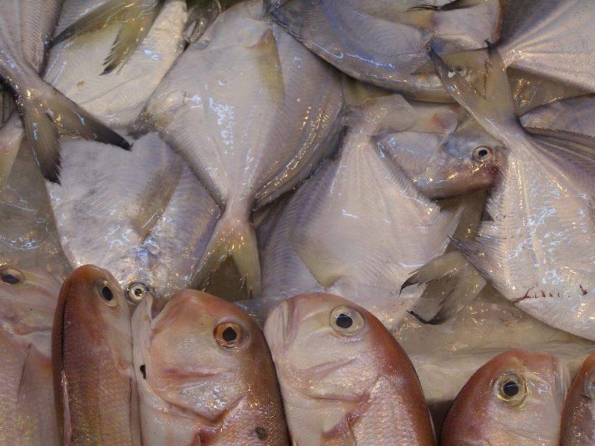 Super frische Fische auf dem Markt