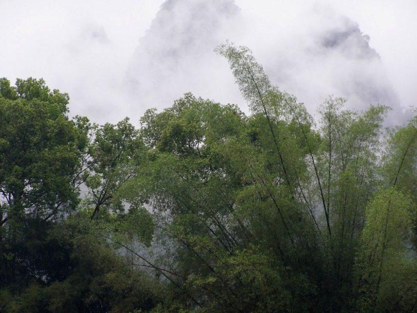 Li Fluss inbegriff  von Grün