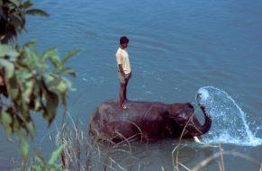 Chitwan Elefant Fluss
