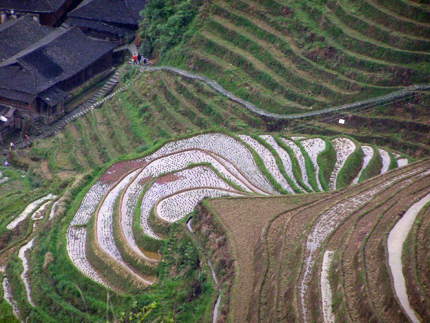 Reisterrassen im Frühling