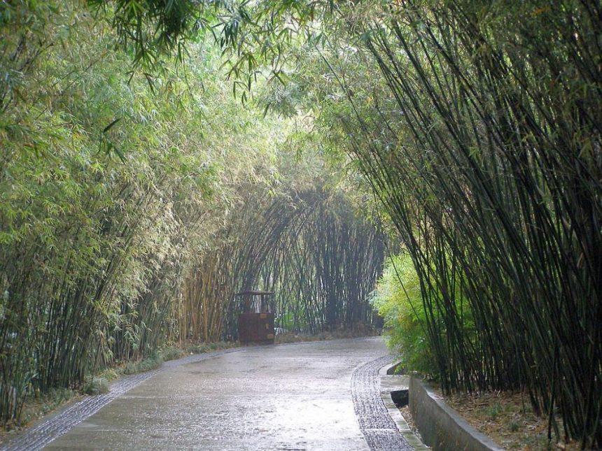 Chengdu Pandaaufzuchtstation