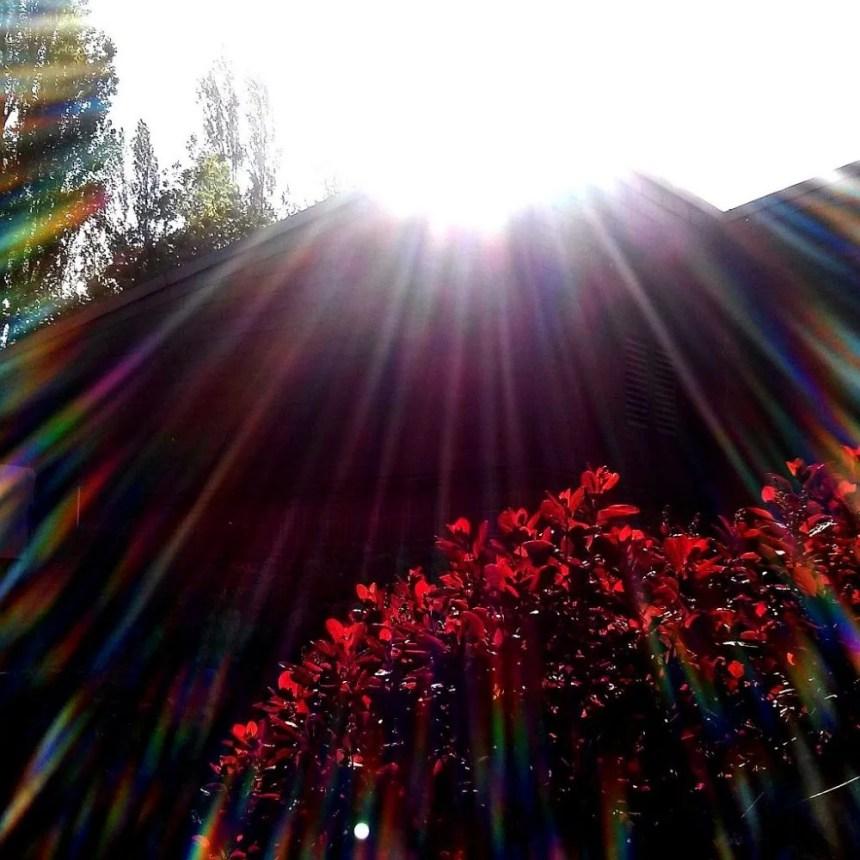 Der rote Busch im Gegenlicht