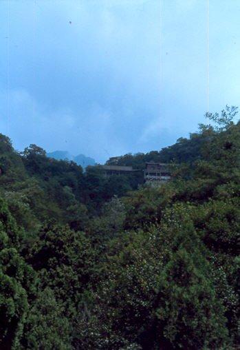 Taishan Wald