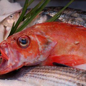 Paris 2 Fisch