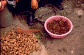 Chengdu Markt Skorpione