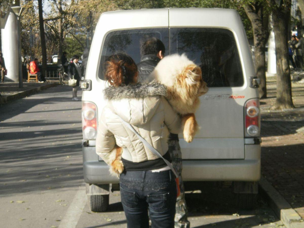 Hund in Peking
