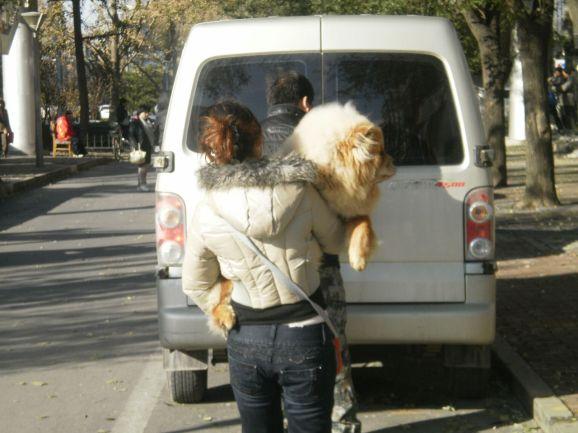 Hund in Peking. Solch einen Hund adotieren die wenigsten.
