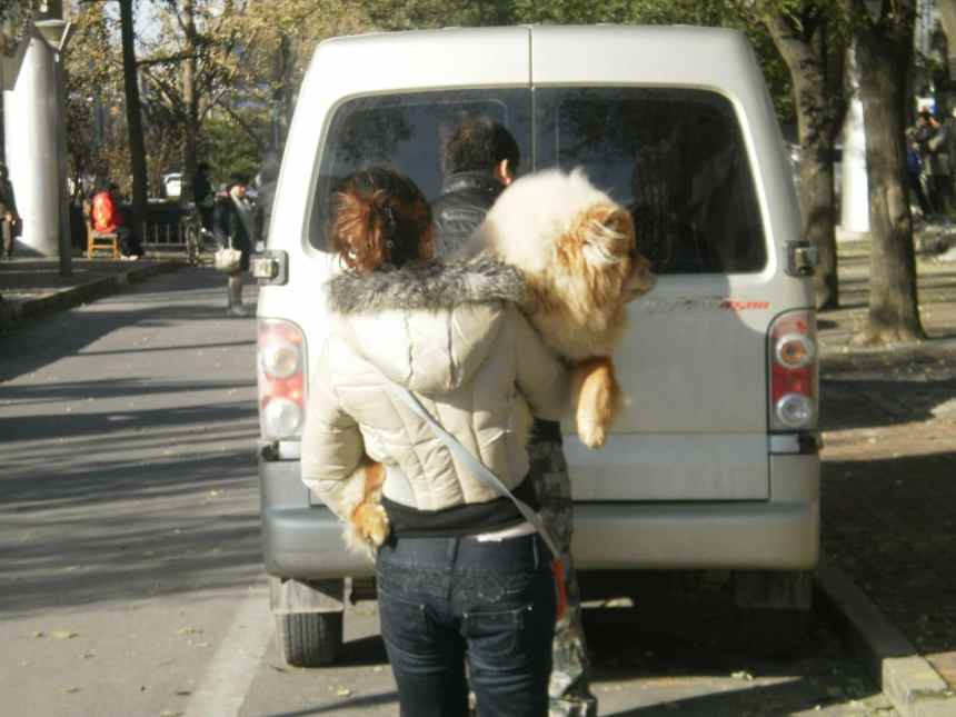 Hund in Peking