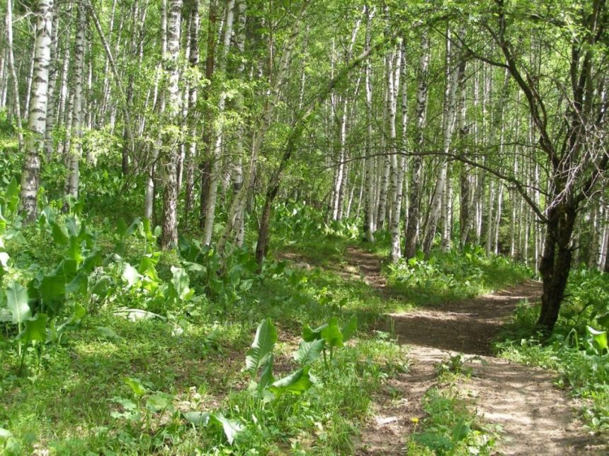 Waldspaziergang beim Medeo