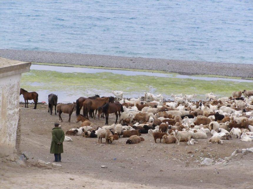 Nomadenland am Sayram See in Xinjiang