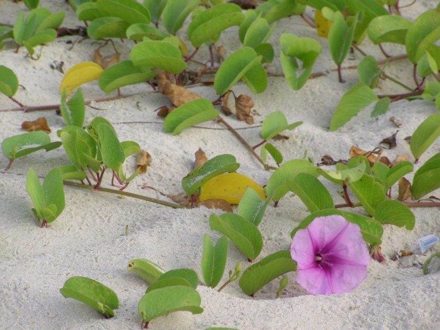 Am Strand von Yalong, Hainan