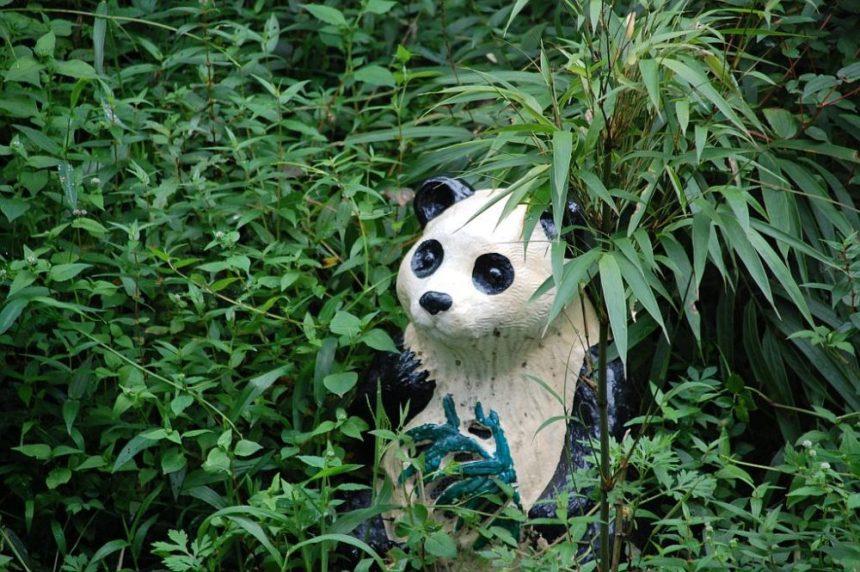 Der Panda als Papierkorb in Bifengxia