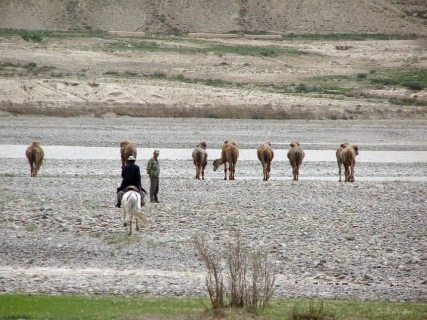 Kamelherde in Xinjiang