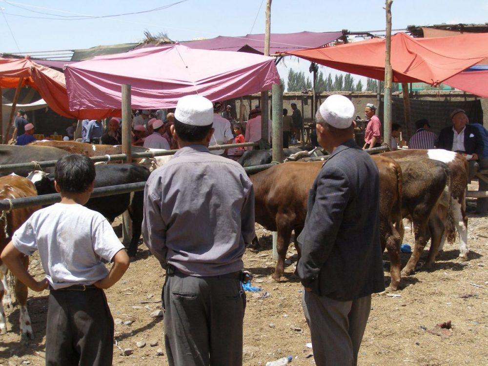 Viehmarkt, Männer schauen auf die Kühe.