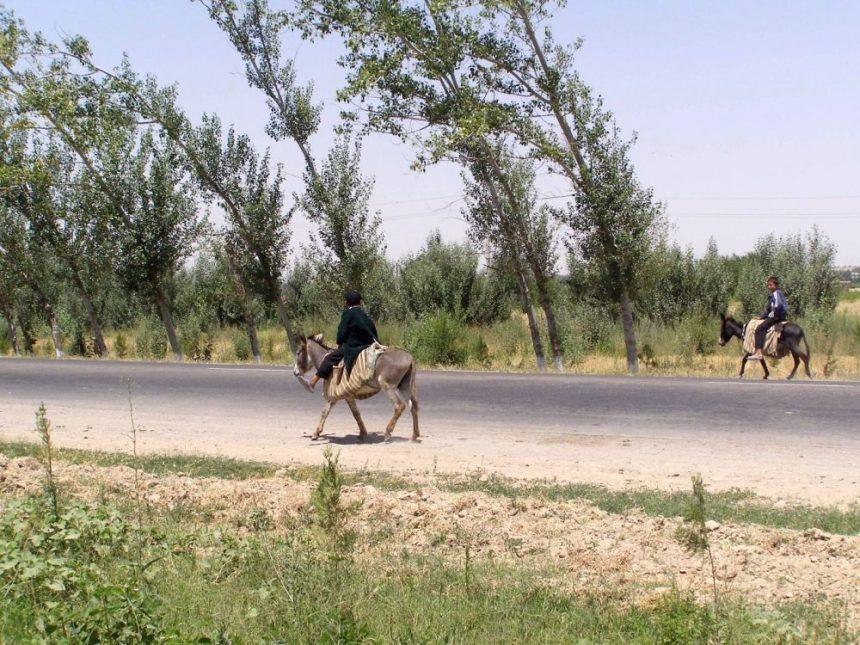 Flowers of Usbekistan: Bäume