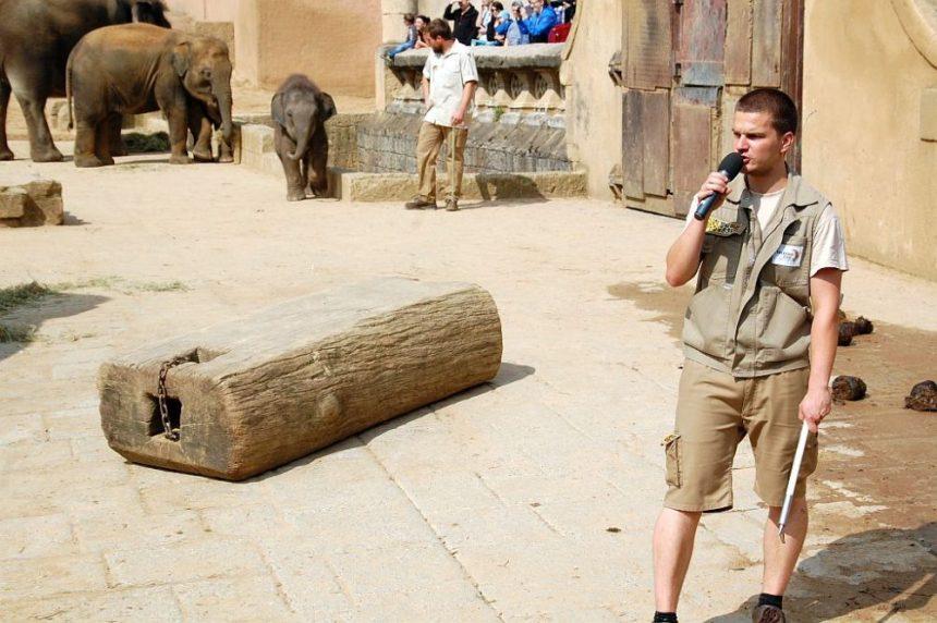 Kommentierte Fütterung der Elefanten