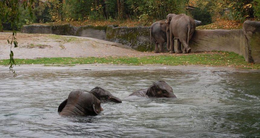 Elefanten baden