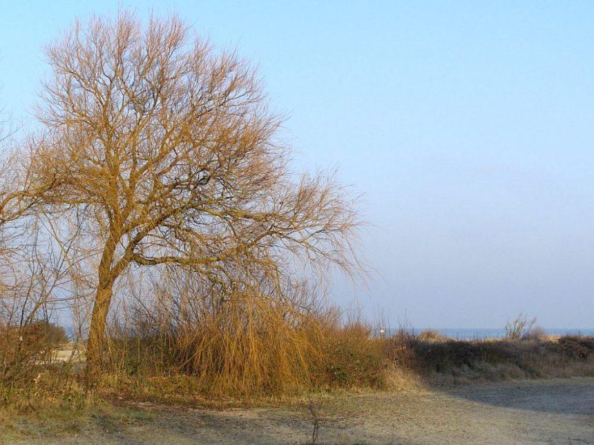 Winterstiimmung zu Silvester Laboe