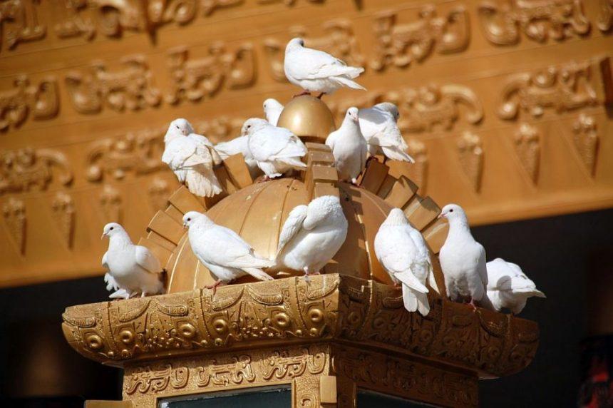 Weiße Tauben beim Schriftzeichenmuseum