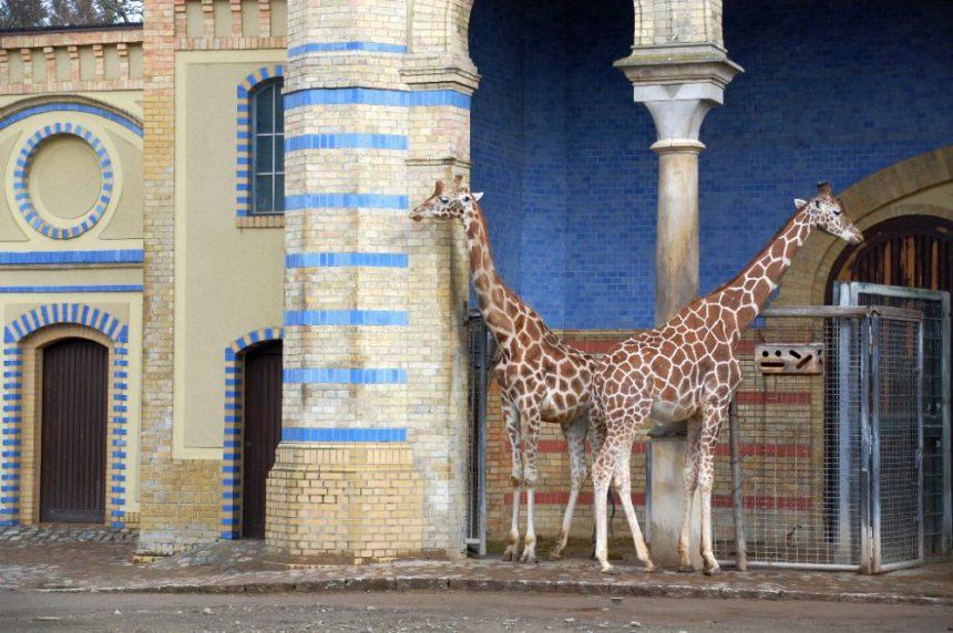Giraffenhaus im Zoo Berlin