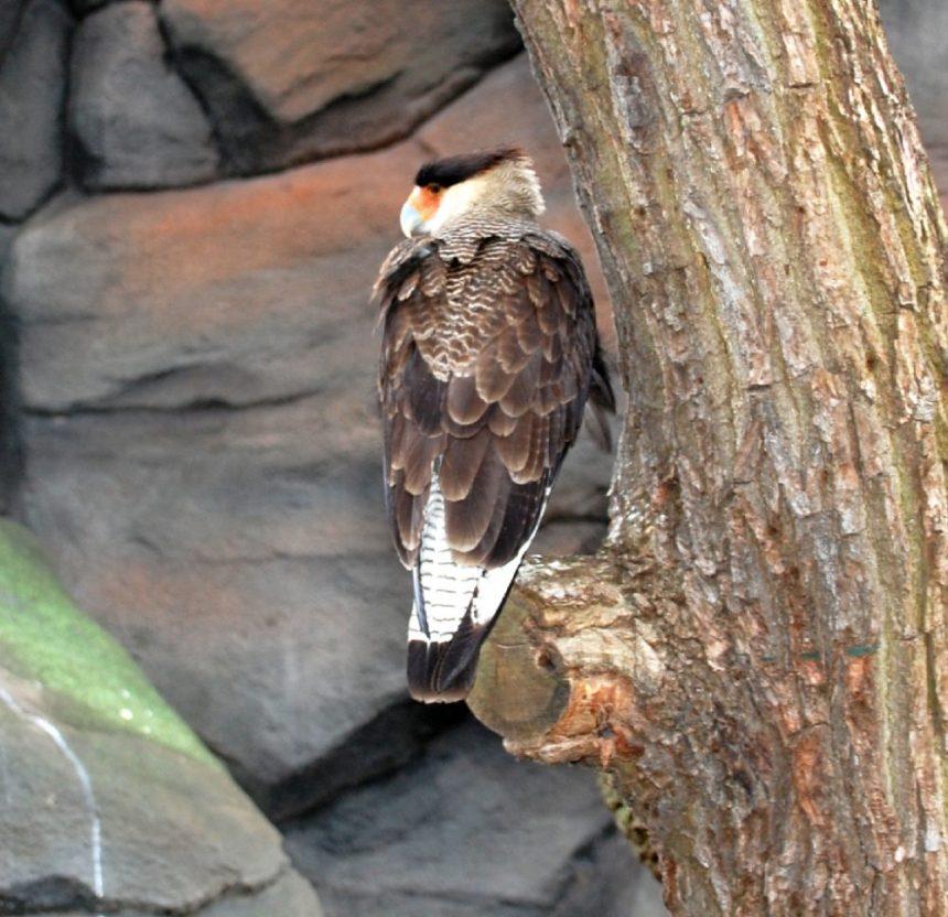 Zoo Berlin - Vogel