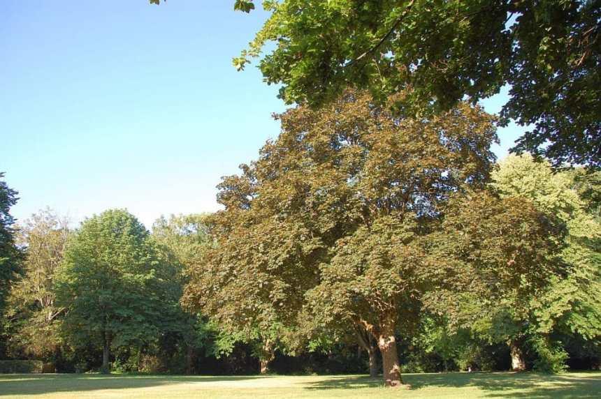 Blohms Park
