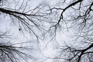 Winter tree top sky