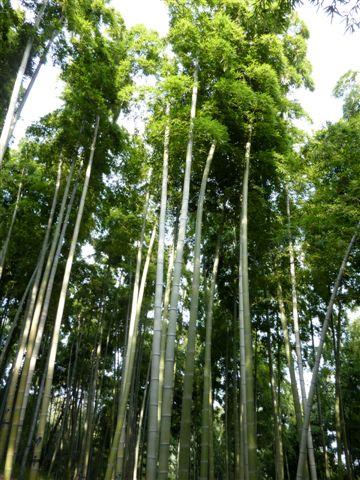 gro er bambus bambusexperte. Black Bedroom Furniture Sets. Home Design Ideas