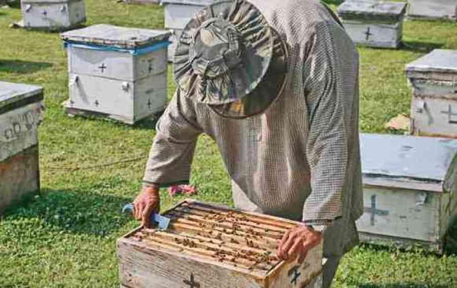 Beekeeping-Colonies