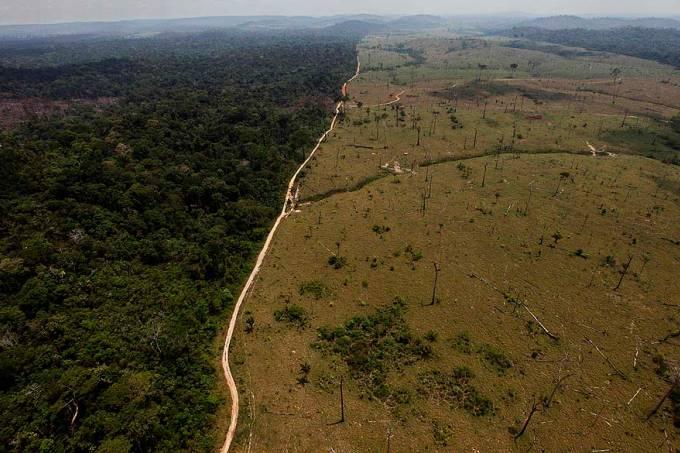 Cresce em mais de 60% o número de desmatamento na Amazônia em 2021