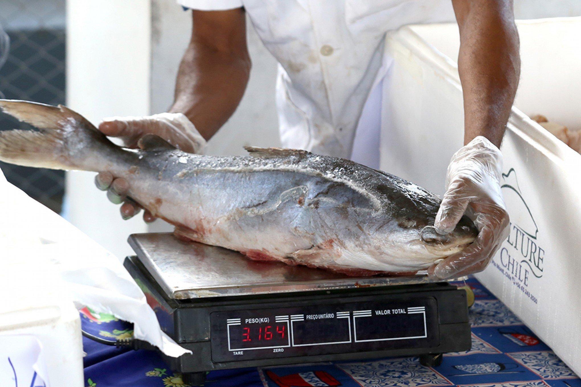 Restrição do consumo de peixe já causa prejuízos aos feirantes em Manaus