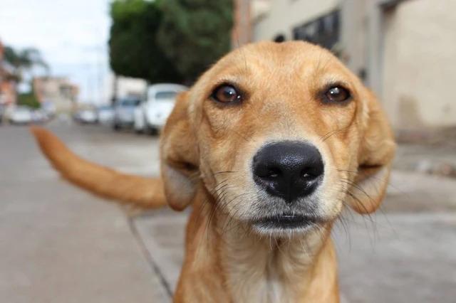 Mais de 400 mil animais domésticos são abandonados neste ano pelas ruas de Manaus