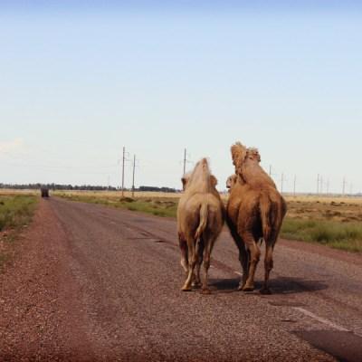 Mes seuls compagnons de route