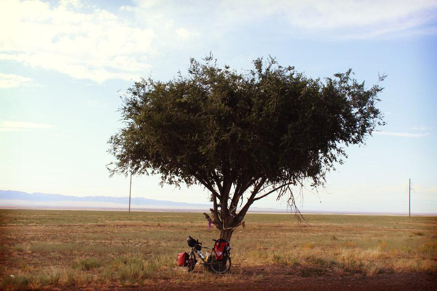 L'unique arbre croisé sur plus de 70km de désert.