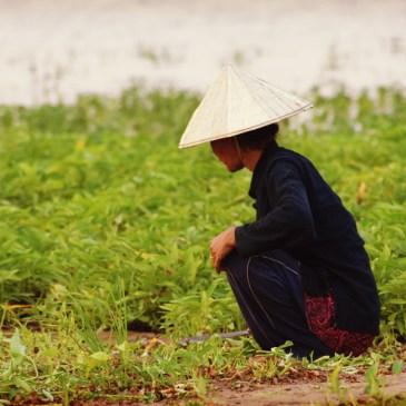 Traversée du Laos en longeant le fleuve du Mékong