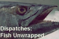 fish_unwrapped_cover