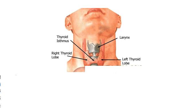 থাইরয়েড (Thyroid) সমস্যা যেসব কারণ জানা দরকার