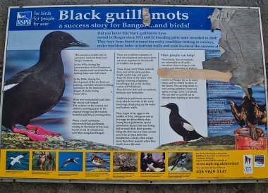 Black Guillemot Sign, Bangor Pier, Eisenhower Pier in Bangor, Northern Ireland