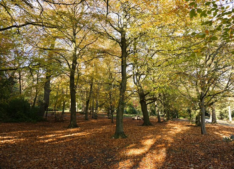Autumn in Castle Park Bangor Forest Park in Northern Ireland