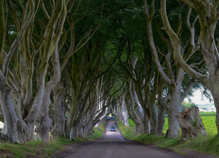 Dark-Hedges Ballymoney, GIants Causeway Coastal Route, Northern Ireland