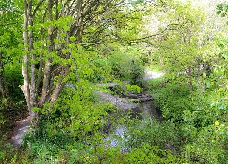 Spring and Summer in Stricklands Glen Fairy Glen Bangor West Northern Ireland