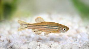 fish-suncreen