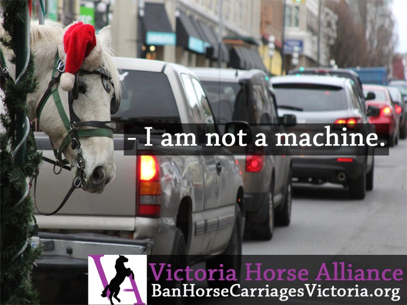 Victoria Horse Alliance