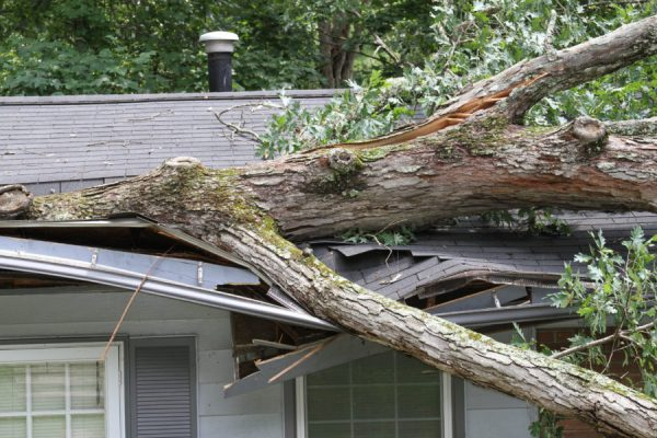 out of state workers compensation, large tree damage to roof on house