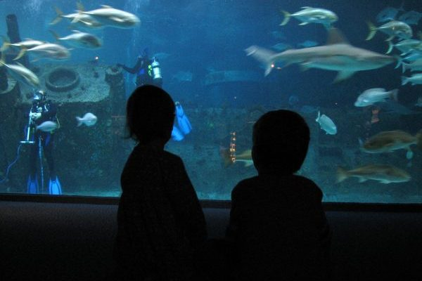 Outer Banks, NC aquarium two children standing before large glass aquarium filled with fish and sharks swimming around a shipwreck with two divers.