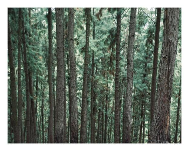 Forêt, France, Banque de l'Image